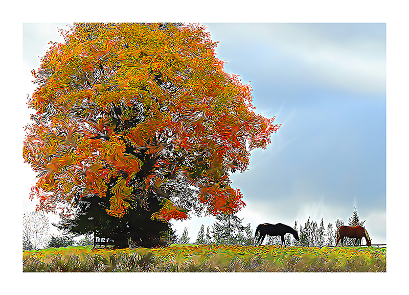 Starry Maple- reworked digital image of a Fall pasture near the Cascade mts
